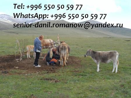 Achat : Guide, driver in kyrgyzstan, travel, hiking, excur  (Autres services) - Autres services neuf et d'occasion - Achat et vente
