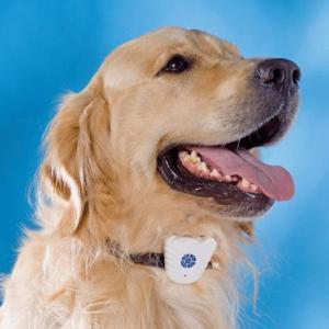 Collier chien anti aboiement neuf
